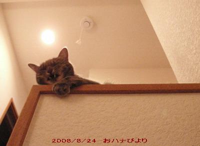 2008-08-24①