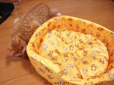 猫ベッド②