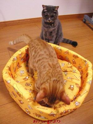 猫ベッド③