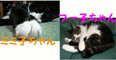 ミミ子&ブー子