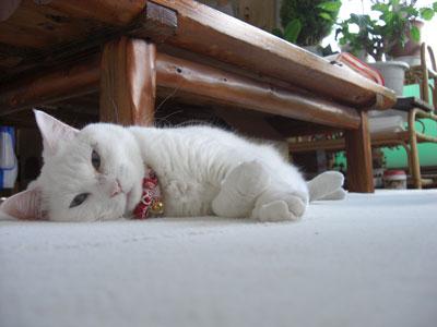マリしゃん、遊び疲れましたぁ?