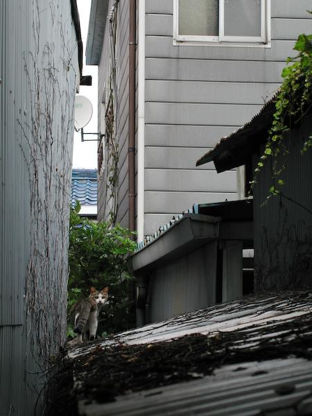 20080528_043