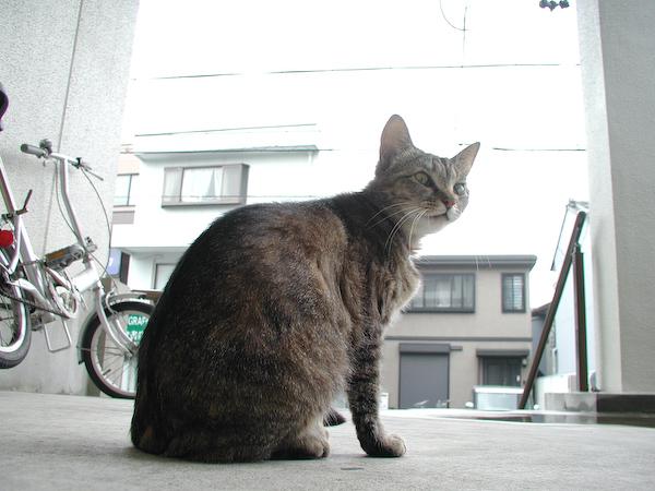 20080529_005