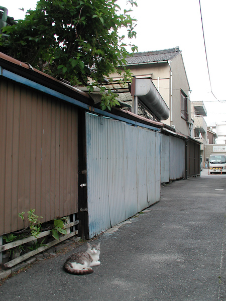 20080601_046