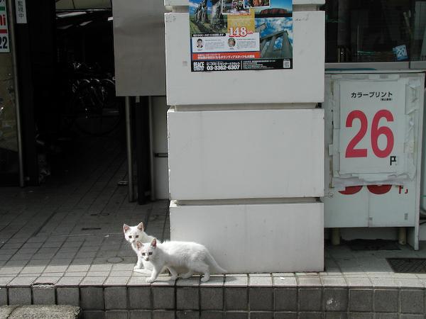 20080603_031