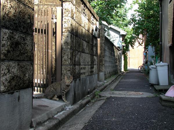 20080603_047