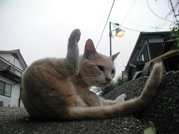 20080611_005