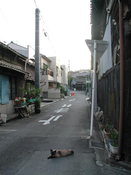 20080718_044