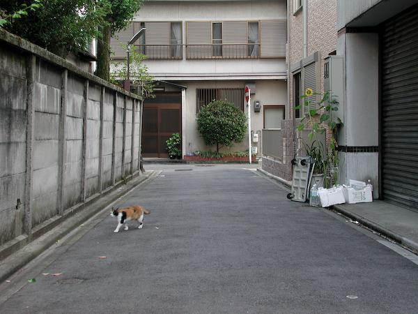 20080720_031