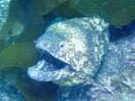大きなウツボが泳いでたぁ~ Photo by KARIN
