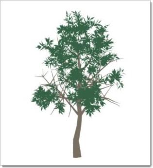 ekr_treebrushes1001.jpg
