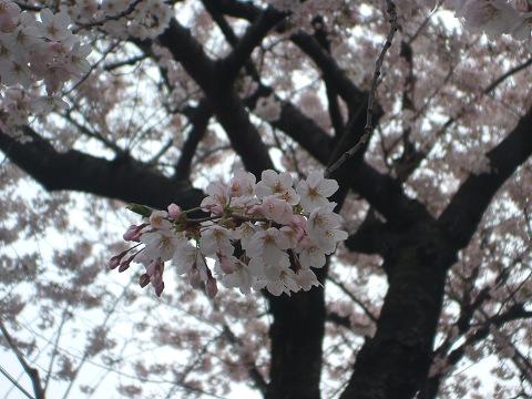 2009-04-05-01