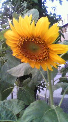 2009-07-19 18_26_00№(051)
