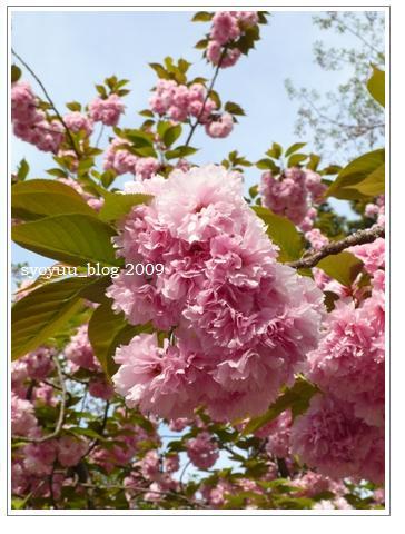 bs1_20090504024037.jpg