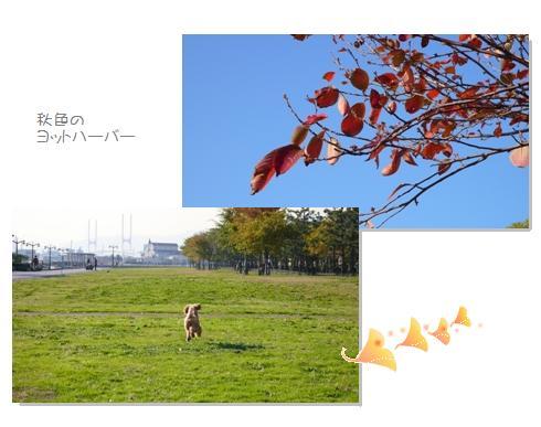 h1_20081209101543.jpg