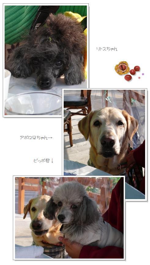 ha4_20090105051851.jpg