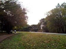 樹林公園1