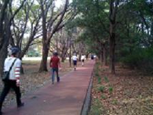 樹林公園2