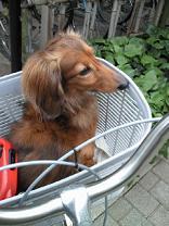 捕まった犬