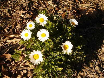 花の国ノースポール
