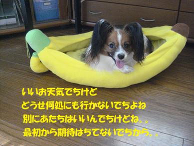 DSC04981のコピー