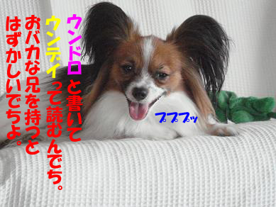 DSC04865のコピー