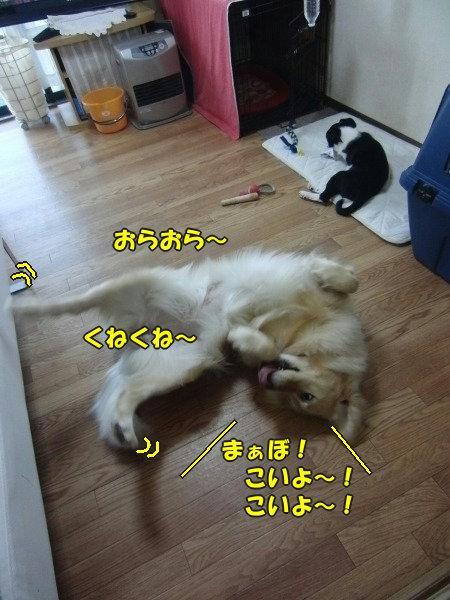CIMG0560_20120419092451.jpg