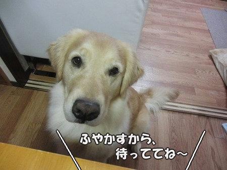 CIMG0878_20120423102339.jpg