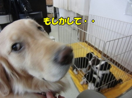 CIMG9467.jpg