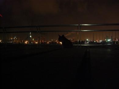 西公園夜3