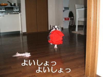 DSCF1844_convert_20081218220502.jpg