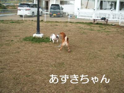 azuki_convert_20090221094412.jpg