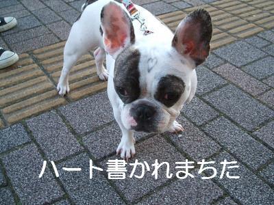 heart_convert_20090221094522.jpg