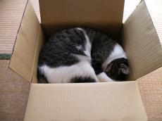 箱にスッポリ281023