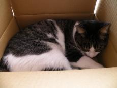 箱にスッポリ381023
