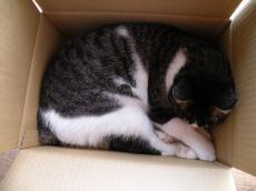 箱にスッポリ481023