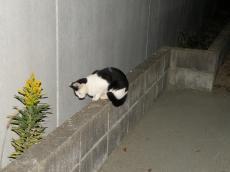 外猫81111