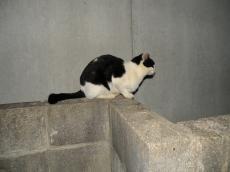 外猫ライバル81111