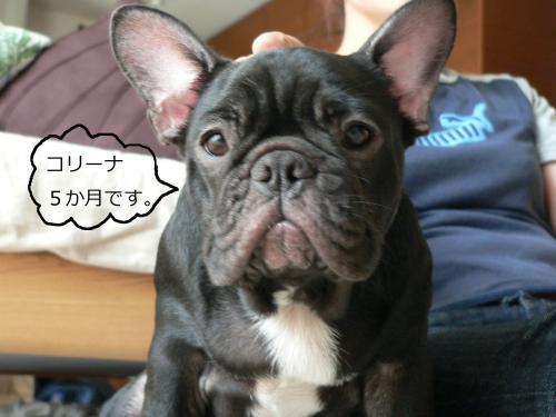繧ウ繝ェ繝シ繝垣convert_20090802090156