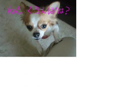 snap_noelle0701_20089311450_convert_20080924110710.jpg