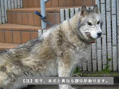 ⑤マリさん(犬神)