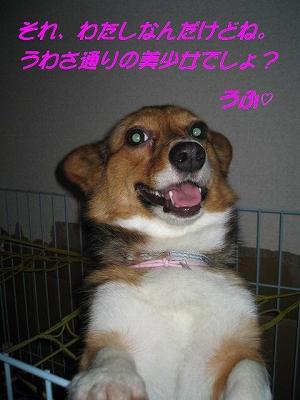 IMG_0769_s.jpg