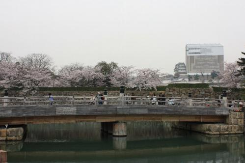 120410sakurahasi011.jpg