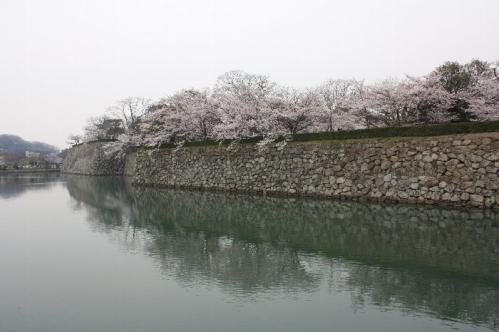 120410sakurahori012.jpg