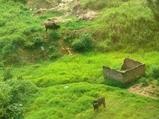 家の外に牛
