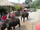 象に乗った!