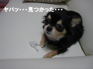 4_20080528162908.jpg