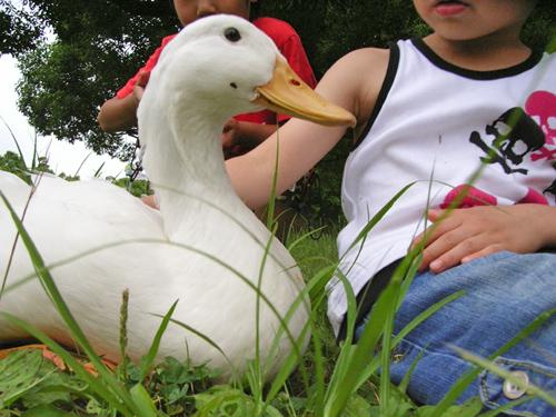 08-6-21-duck3.jpg