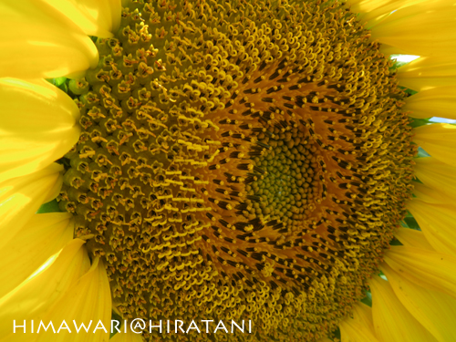 08-8-9-himawari6.jpg