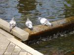 鳩も水浴び可愛いねっ